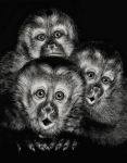 Three Capuchins